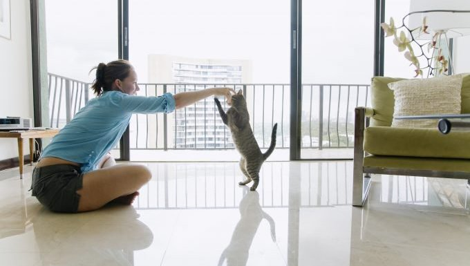 cat and human play in apartment