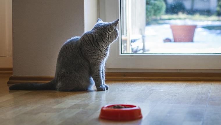 Domestic cat in home interior.