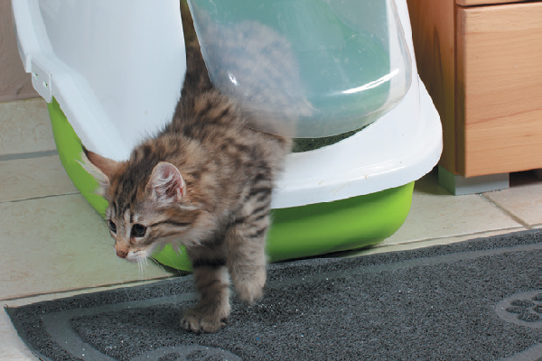 Cute kitten coming out of an enclosed litter box.