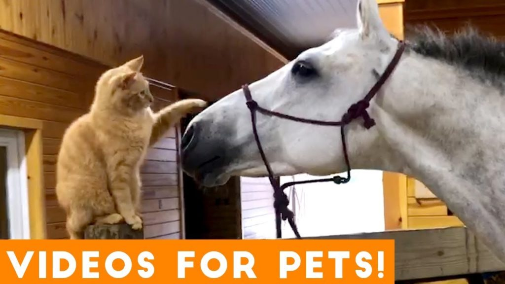[1 HOUR] Better of the WEEK! Humorous Pet Movies | September 2018