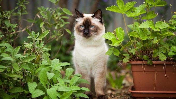 cat sitting in garden