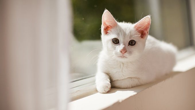 cat lying in sun next to window