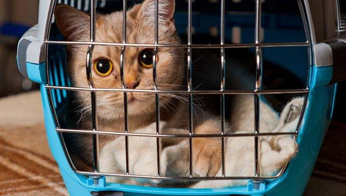 best-cat-carrier