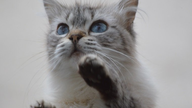 A Little Cat on the Window