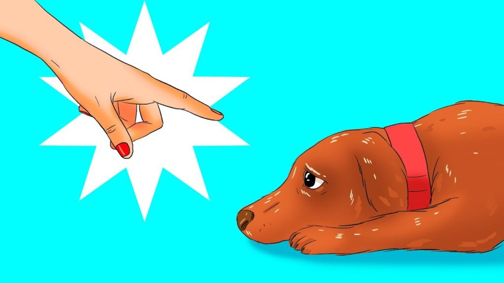 12 Dangerous Issues You Do to Your Canine With out Realizing It