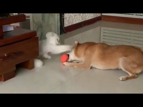 Humorous Pet Movies #18 || Attempt Not To Snigger