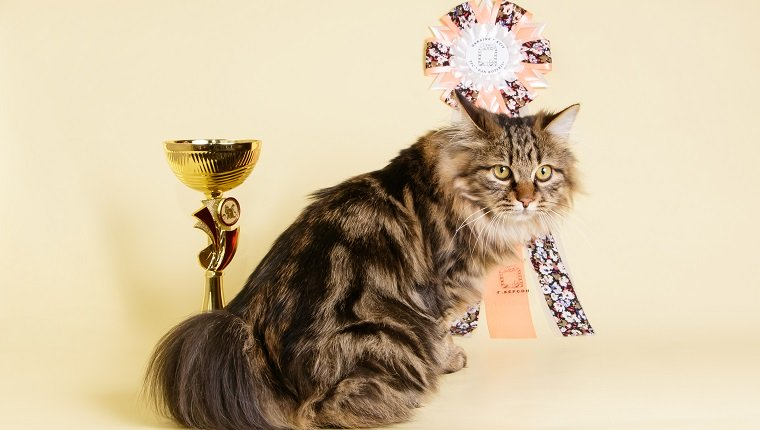 Guinness World Information Day: 6 Biggest World Information Starring Cats