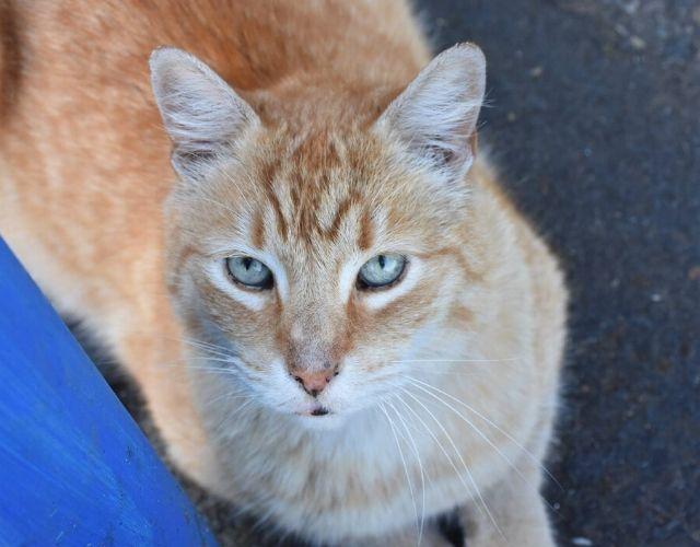 dennys cat