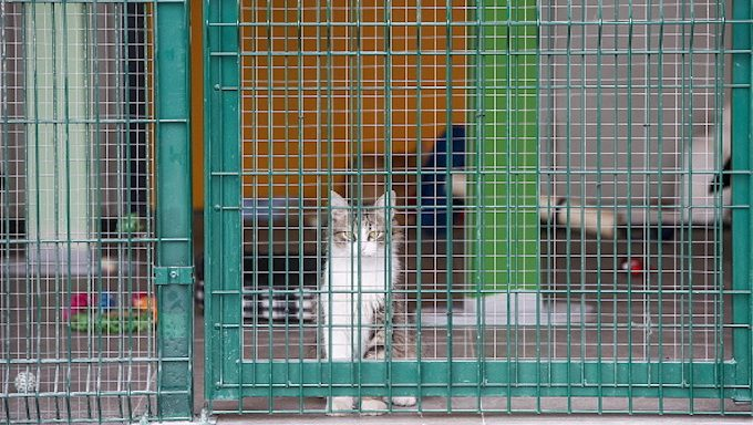 cat in caged play area