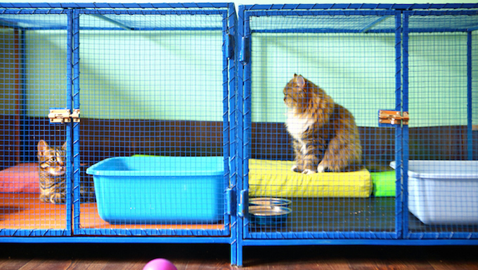 cats in caged play area