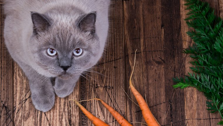 Can Cats Eat Carrots? Are Carrots Protected For Cats?