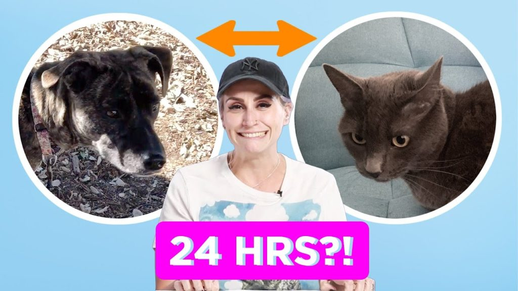 Canine Individual And Cat Individual Swap Pets For A Day
