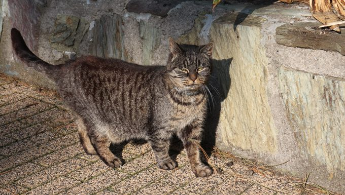 Stray Cat Standing On Footpath