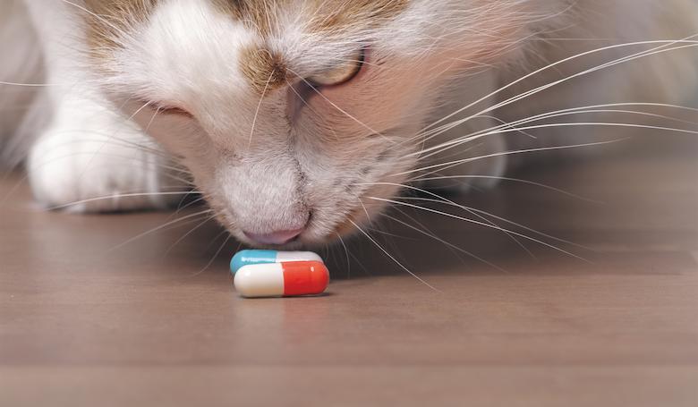 Beware These Cat Family Hazards