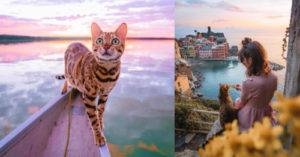 Bengal Magnificence Travels The World In Magical Type