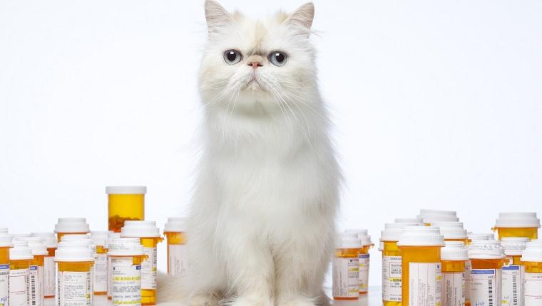 Persian Cat sitting with prescription bottles