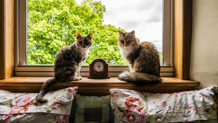 Why The Begin Of Daylight Saving Time Drives Some Cats Bonkers