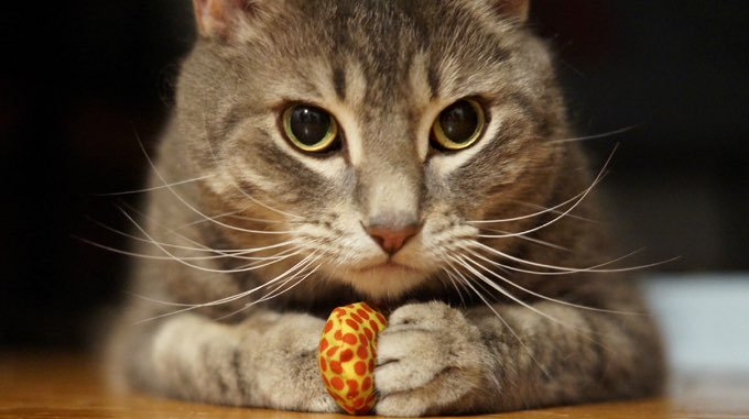 Respect Your Cat Day: 10 Ideas To Present Your Cat Respect