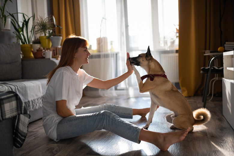 Train Your Canine a New Trick Whereas You're Caught At Dwelling