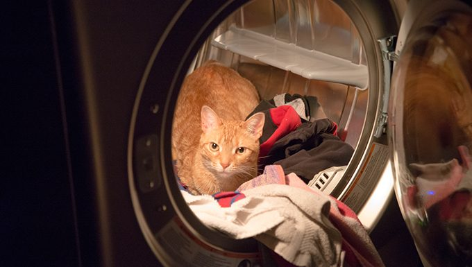 cat in laundry machine