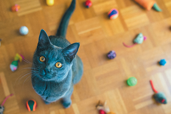 Cat Toys: Find out how to Hold Them Clear and When to Throw Them Out