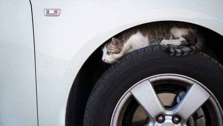 Cat Sitting On Car Tire