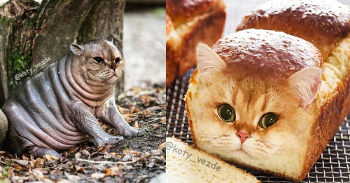 Artist Creates Photoshop Blends Of Cats & Critters