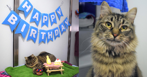 No person Got here To This Candy Tabby's Birthday Celebration