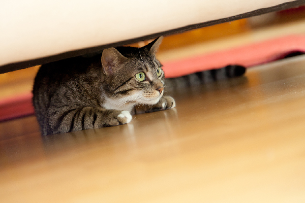 A cat hiding under the couch.