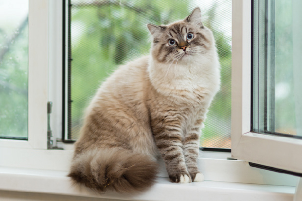 What's Mew at Catster: April 2020 Cat Occasions