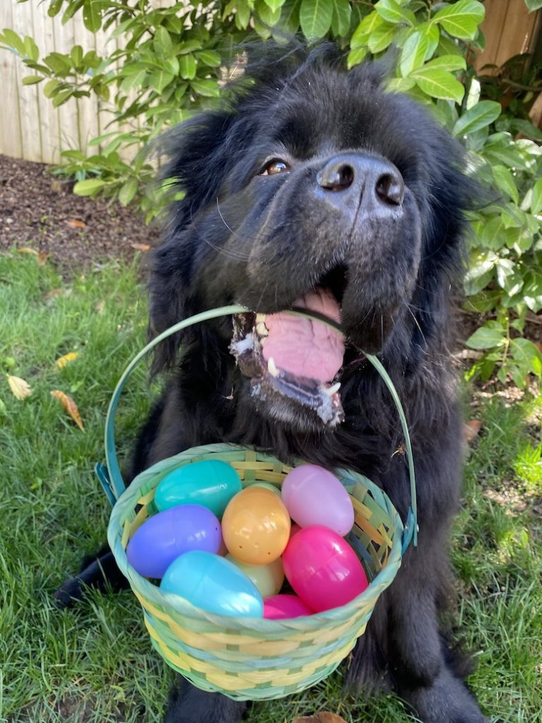 Right here's Learn how to Plan an Easter Egg Hunt for Your Canine