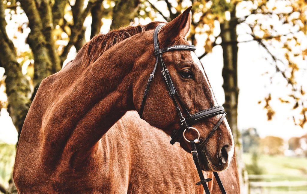 7 TIPS TO KEEP YOUR HORSE SAFE IN THE PASTURE