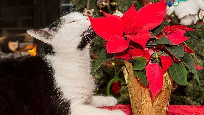 cat sniffs house plant