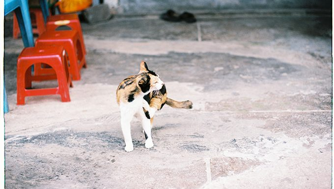 cat scratching with hind leg