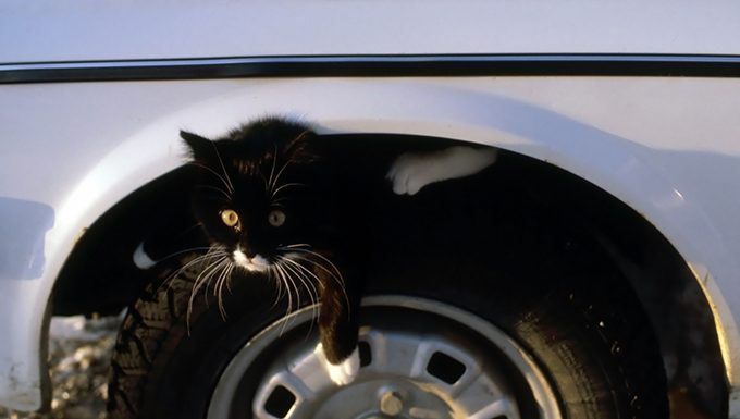 cat in tire well